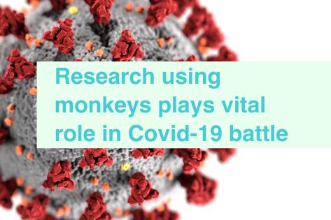 Covid-19 research using monkeys