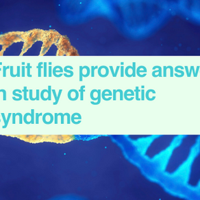 Fruit fly study of genetic syndrome