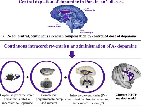 Potential treatment for Parkinson's in monkeys