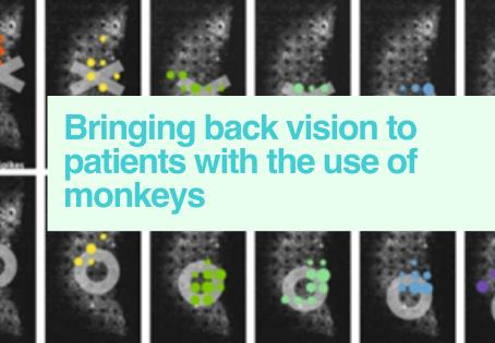 Vision studies in monkeys