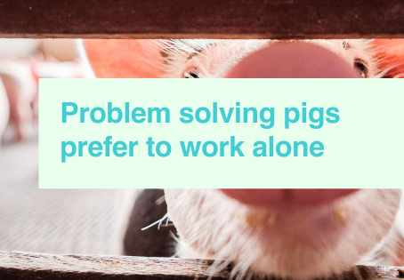 How dogs and pigs communicate with humans