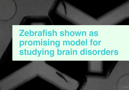 Zebrafish & brain disorders