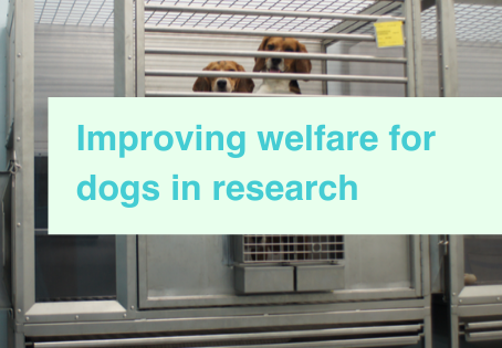 Research dog welfare