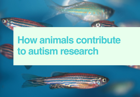 Animals in autism research