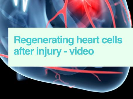 Regenerating heart cells
