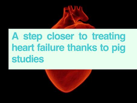 Heart failure & pig studies