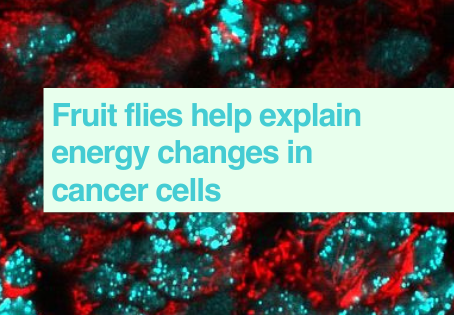 Images of cancer cell energy changes