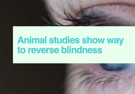 Animal studies & blindness