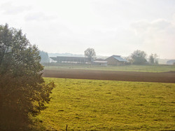 Antonihof- im Nebel