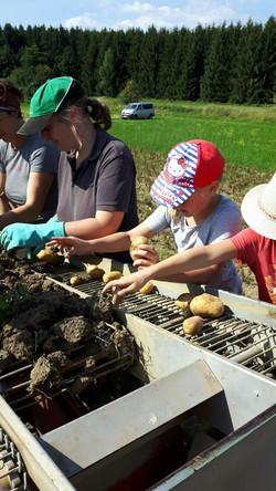 Antonihof - Kartoffelernte