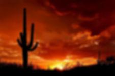 Cactus, Arizona sunset