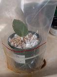 7 Plastic bag over leaf.jpg
