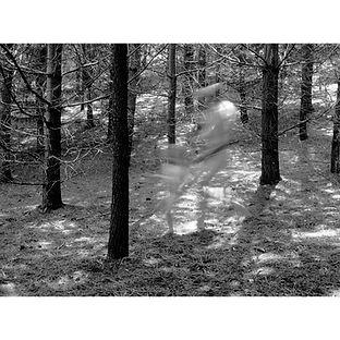 Agonquin forest dancer trees