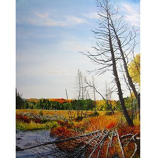 Algonquin Autumn Swamp Trees Water
