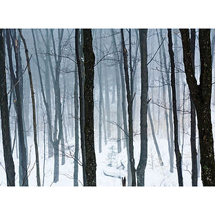 Trees in Algonquin Winter Forest