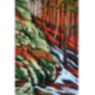 Algonquin Park Ravine Forest