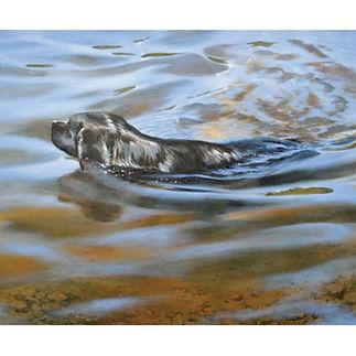 Dog Black Lab swimming art print