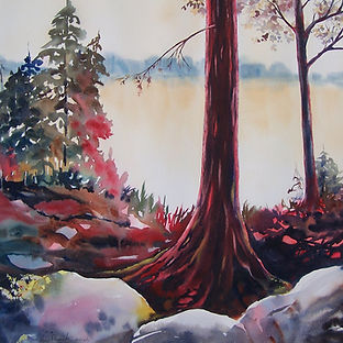 Trees, forest, lake, rocks