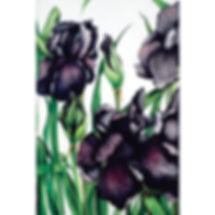 Black Iris, flower, artist, watercolour