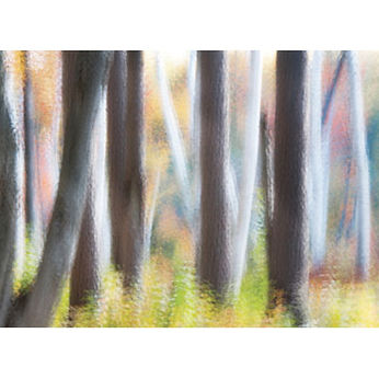 Photograph forest trees art print