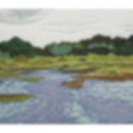 Algonquin Park Swamp Water Trees