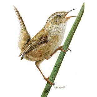 Bird, Parry Sound, Watercolour