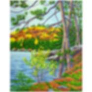 Algonquin lake autumn forest