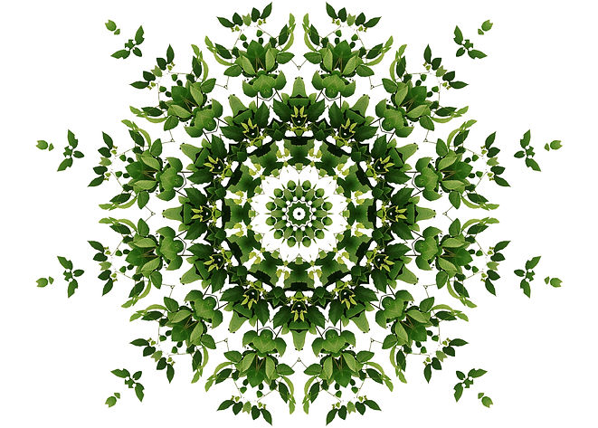 CellFit_Green_Line.jpg