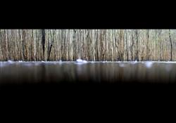Coombabah Wetlands