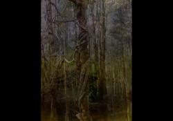 Dark Coombabah Heritage Wetlands