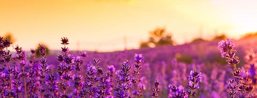 Lavendel3.jpeg