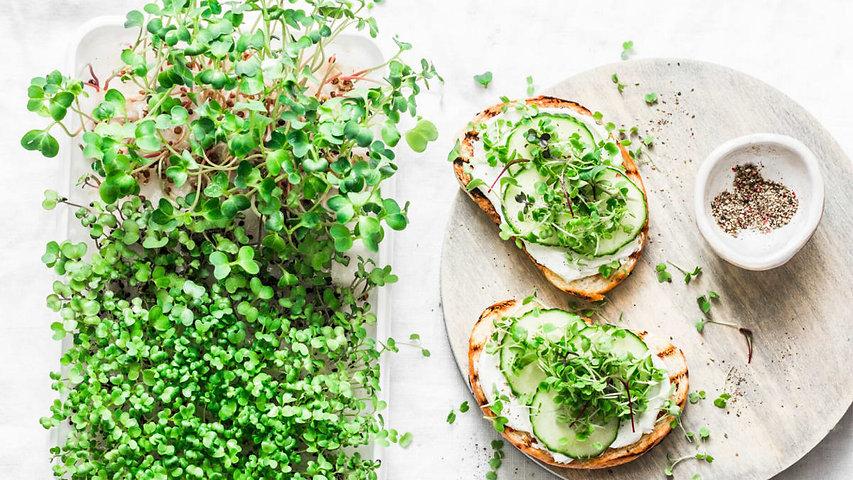 Microgreen toast.jfif