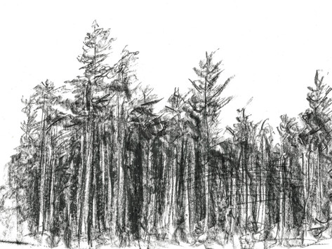 On Bark Beetles and Droughts in the Czech Republic