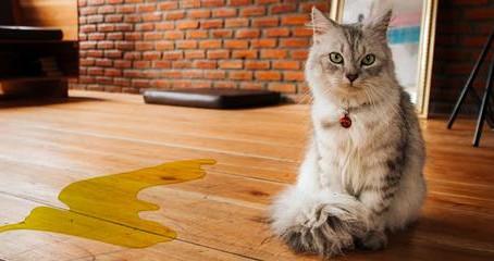 חתול משתין מחוץ לארגז