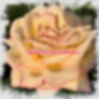 Cover Garden Rose.jpg