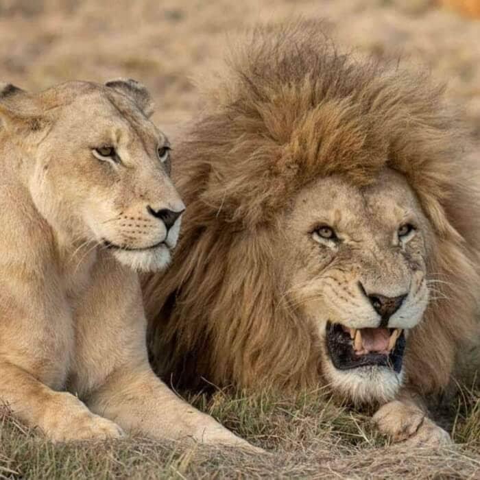 Cape Town Safari Full Day Tour
