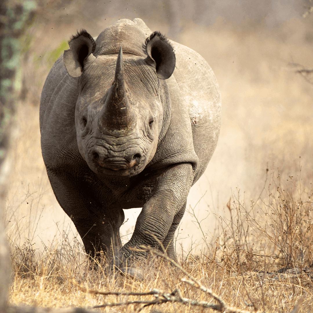 Rhino & Lion Park- Half Day