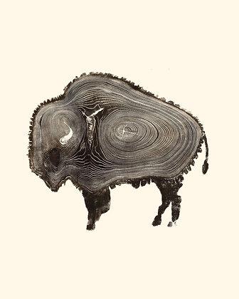Buffalo Tree Rings