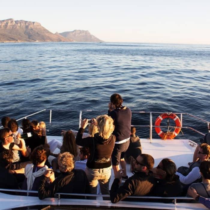 Marine Wildlife Cruise & Winelands Tour