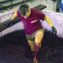 Gonzalo, enólogo de la bodega Pagos del Moncay, pisando uva de la manera tradicional