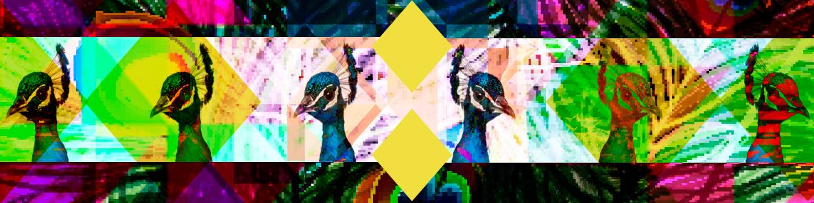 peacock-the-fun-farm.jpg