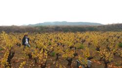 La Casa de Lúculo vineyards IV