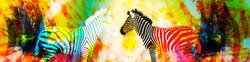 zebra-the-fun-farm.jpg