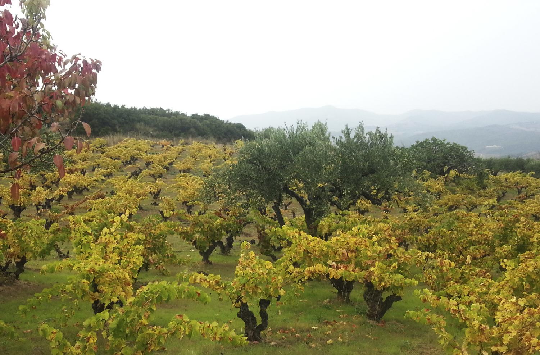 La Casa de Lúculo vineyards III