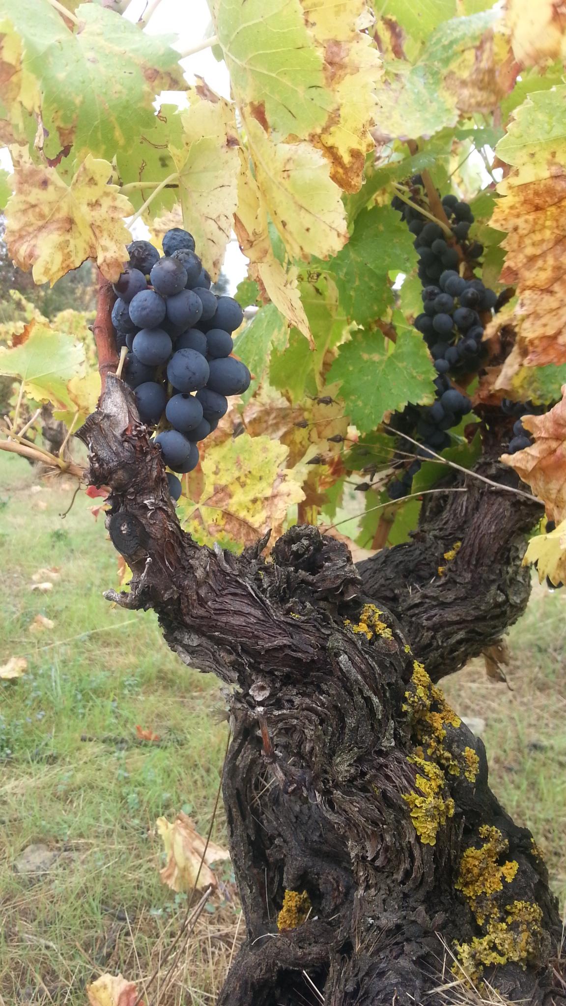 La Casa de Lúculo vineyards