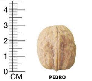 pedro-1.jpg
