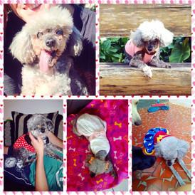 Se aniversário de cachorro já é bom, aniversário de sobrevivente do câncer é melhor ainda!