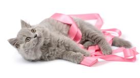 Outubro Rosa Pet – Prevenção do Câncer de Mama em cadelas e gatas e como a nutrição pode ajudá-las