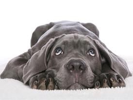 Meu cão / gato está com câncer: o que preciso saber para ajudá-lo? Parte I