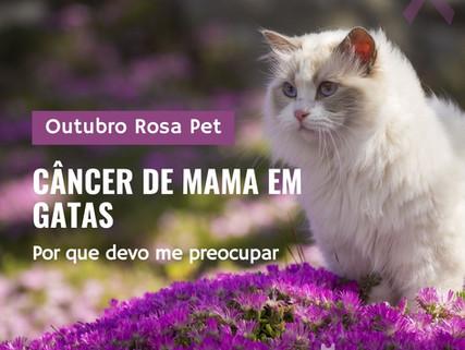 Tumor de mama em gatas: devo me preocupar?